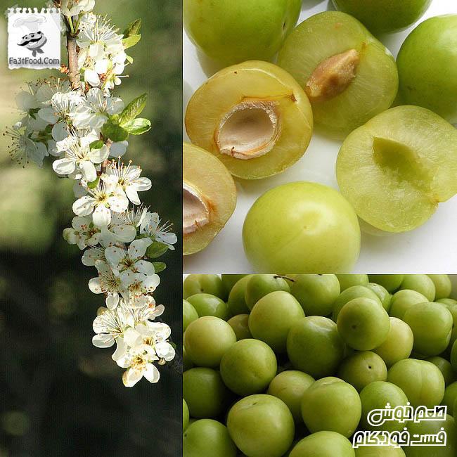 Owoce_Renkloda